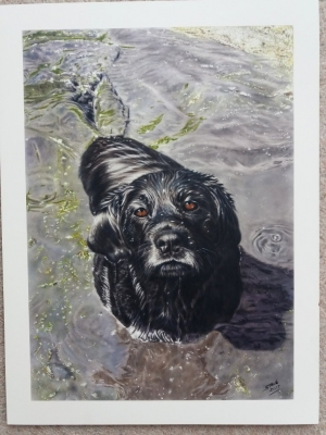 Wet Dog, A3, MDF coated with Gesso